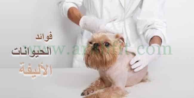 ما هي فوائد الحيوانات الأليفة للصحة النفسية والجسدية وما هي أضرارها ؟