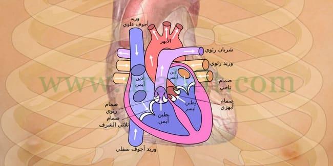 مريض القلب في شهر رمضان